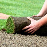 Рулонный газон. Виды и советы по уходу